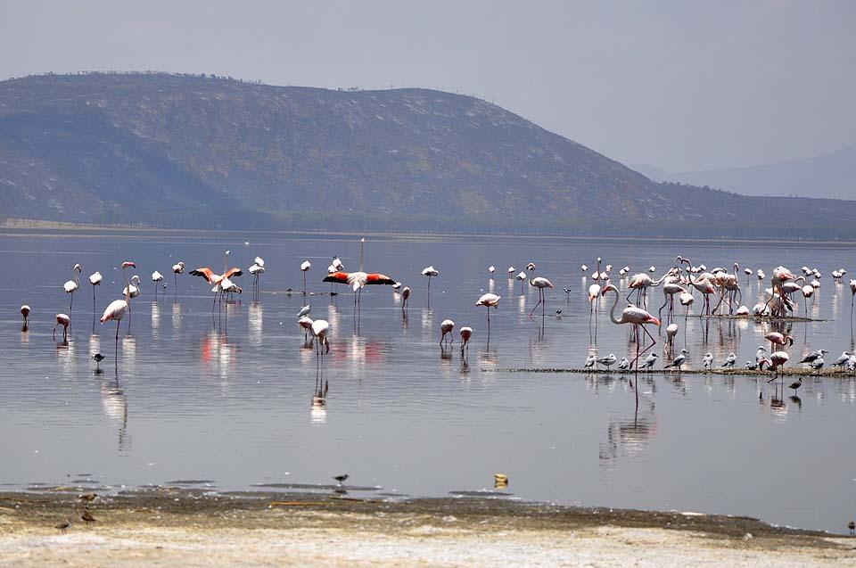 Kenya 2011 024