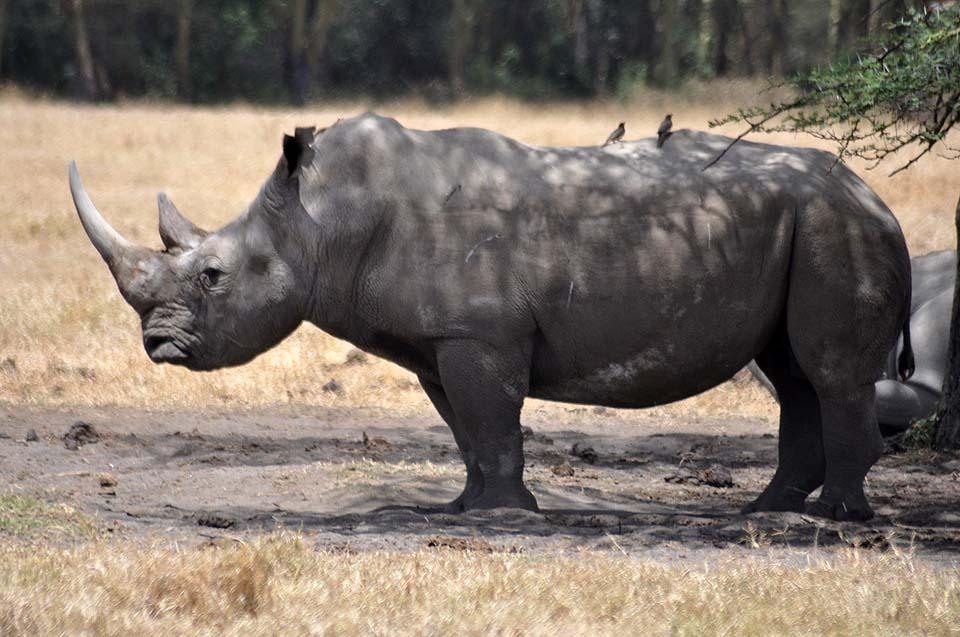 Kenya 2011 035