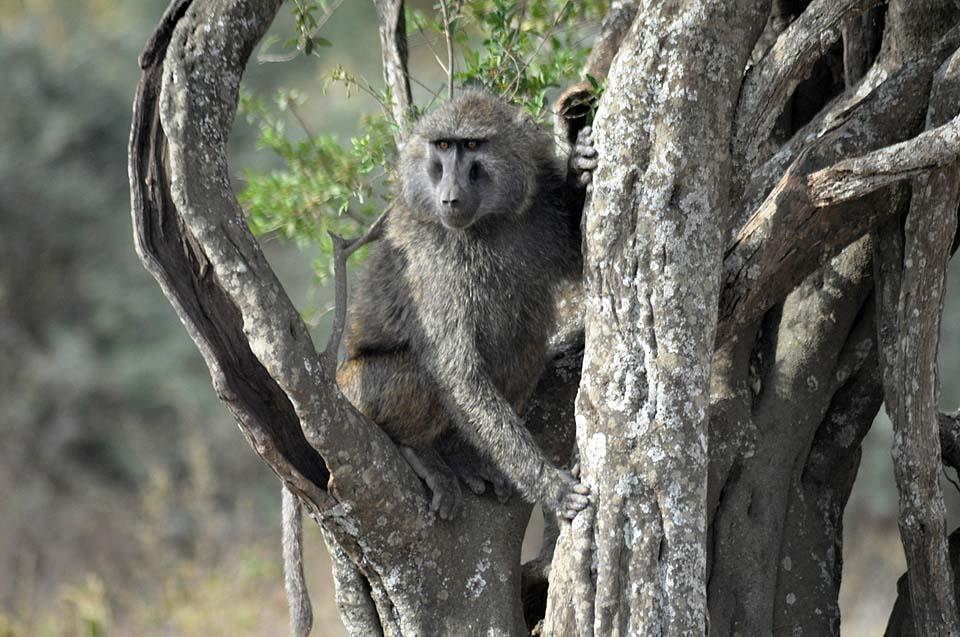 Kenya 2011 053