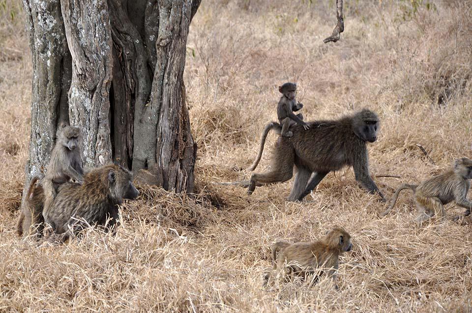 Kenya 2011 057