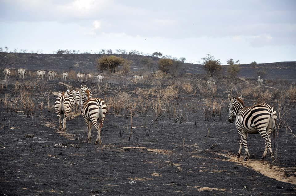 Kenya 2011 064