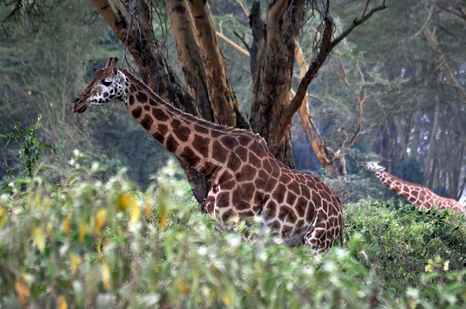 Kenya 2011 065