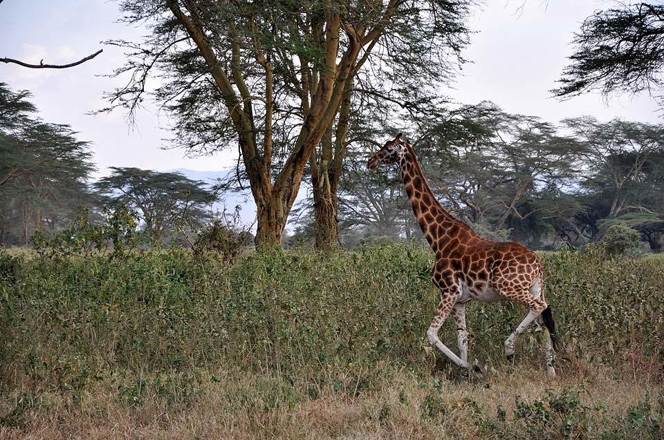 Kenya 2011 071