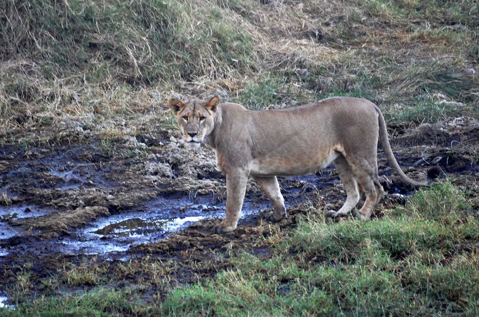 Kenya 2011 089