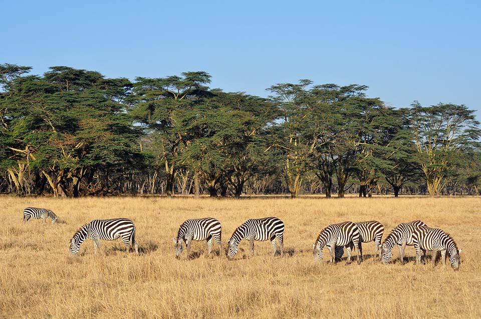 Kenya 2011 091