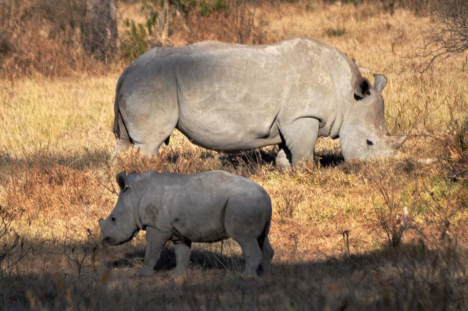 Kenya 2011 101