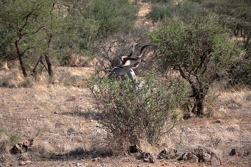 Kenya 2011 238