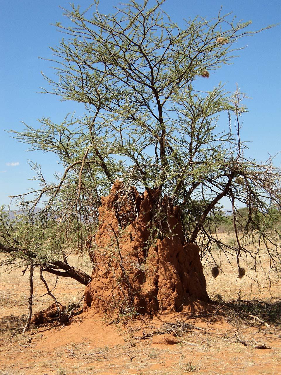 Kenya 2011 256