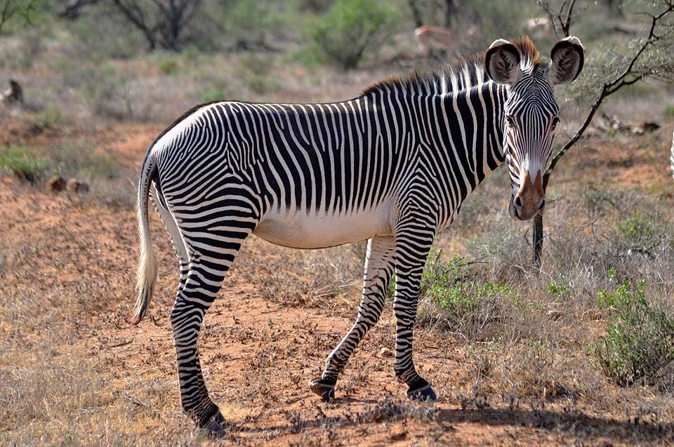 Kenya 2011 280
