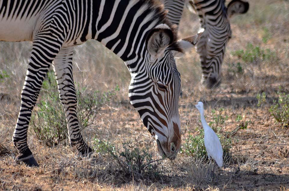 Kenya 2011 282