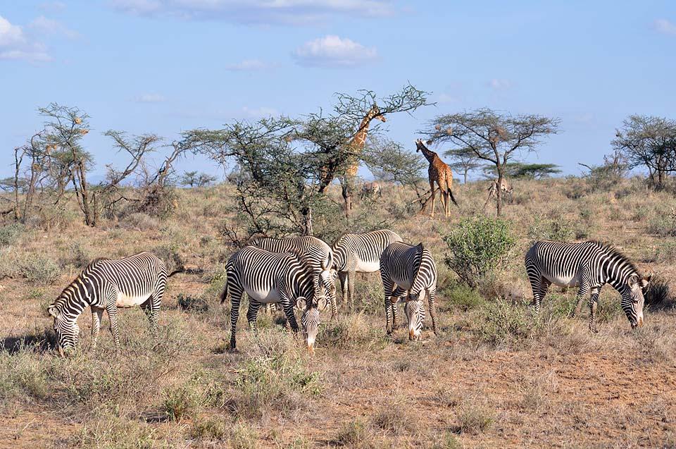Kenya 2011 292