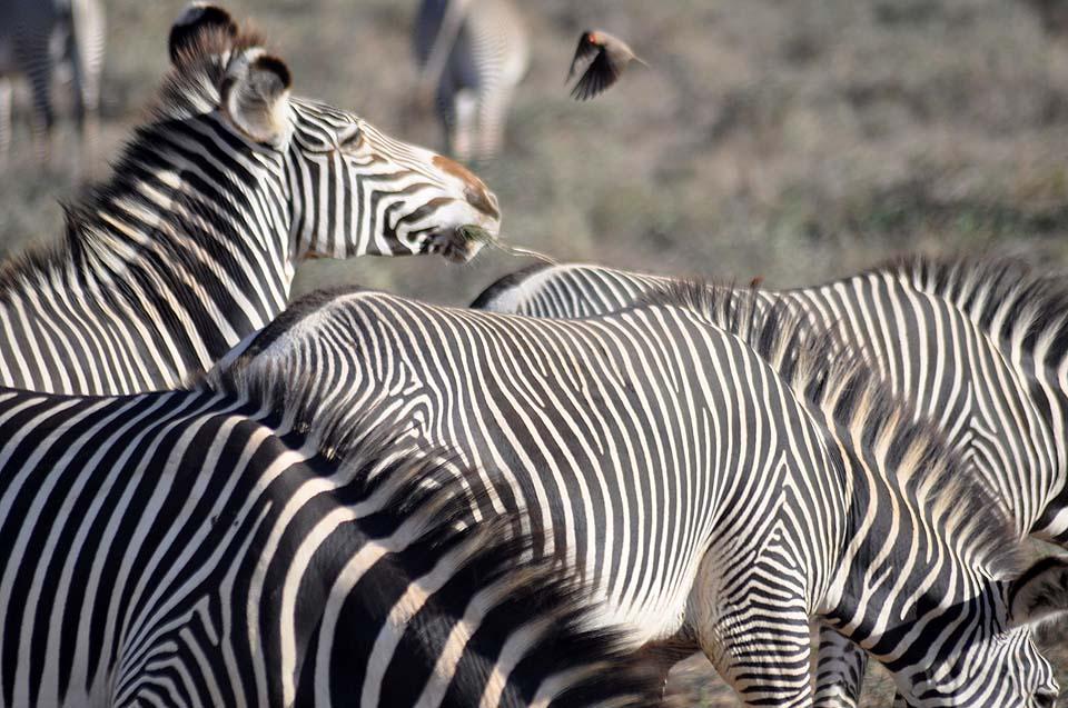 Kenya 2011 293