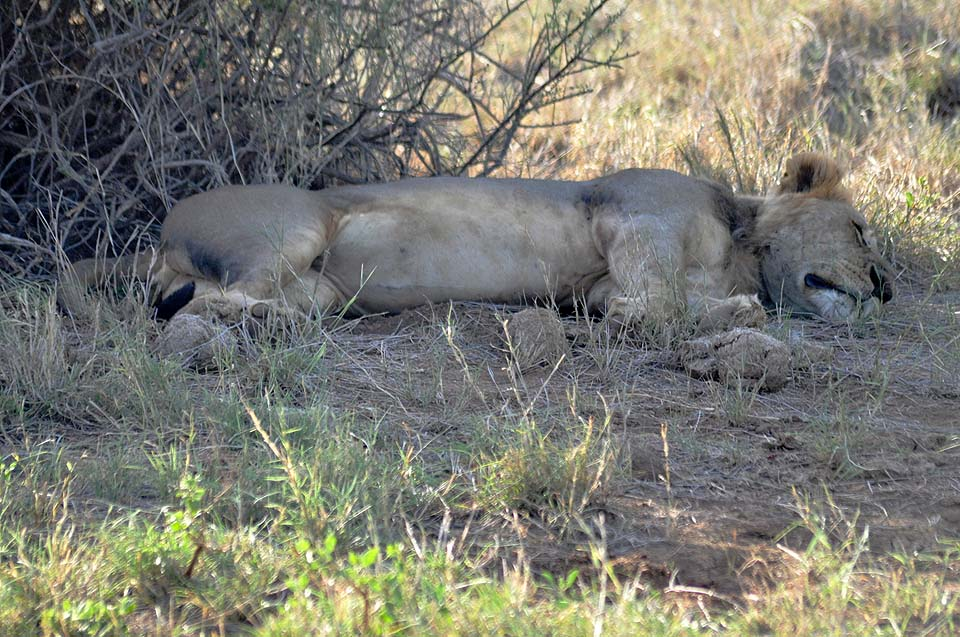Kenya 2011 294