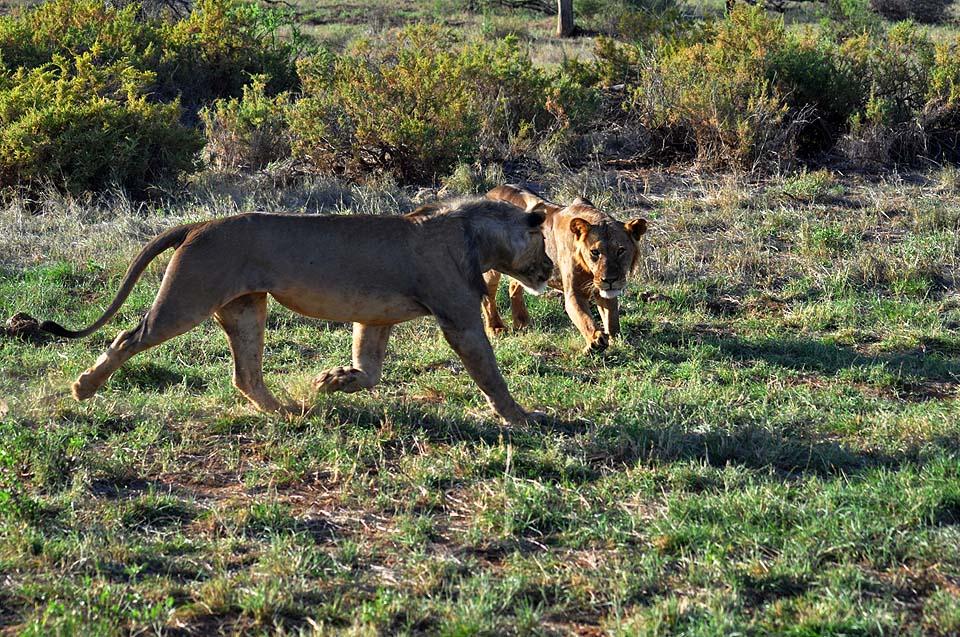Kenya 2011 298