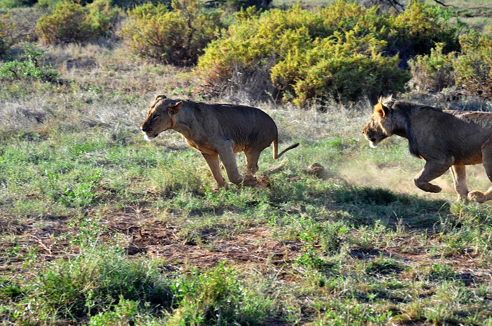 Kenya 2011 299