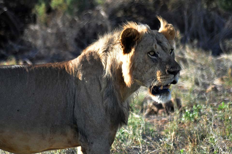 Kenya 2011 301