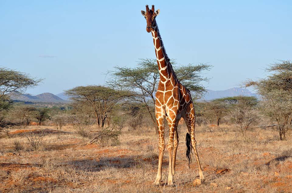 Kenya 2011 307