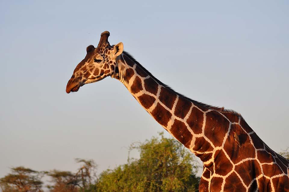 Kenya 2011 318