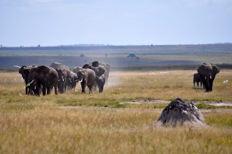 Kenya 2011 364