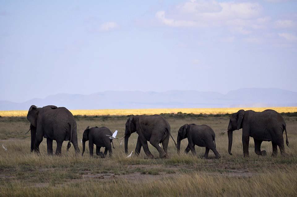 Kenya 2011 367