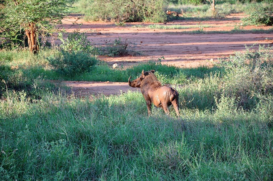 Kenya 2011 490