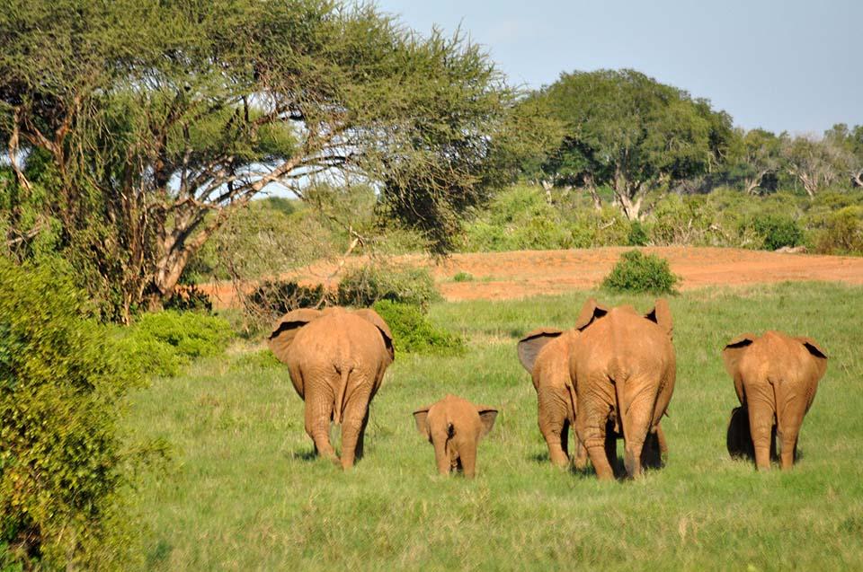 Kenya 2011 508