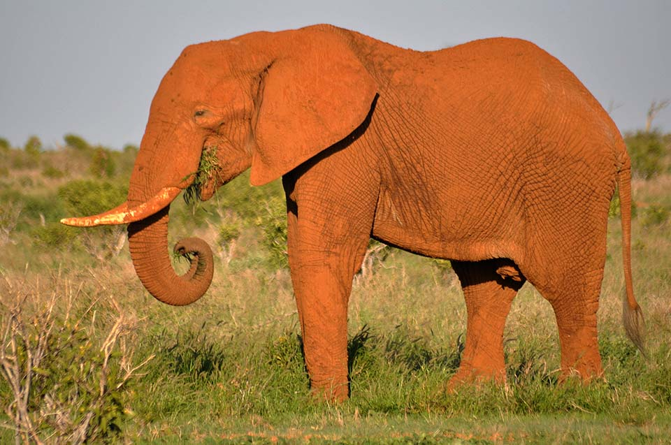 Kenya 2011 522