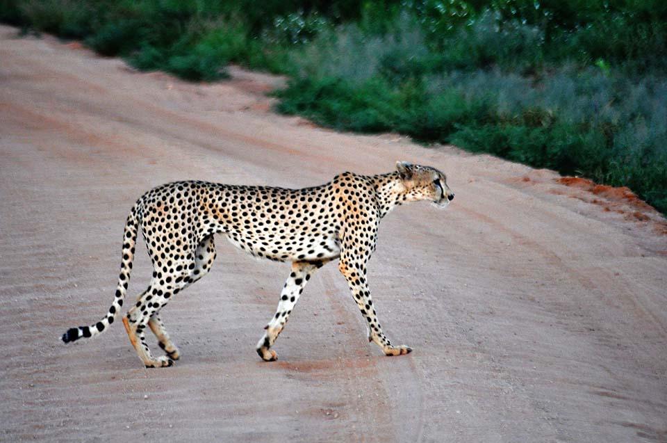 Kenya 2011 531