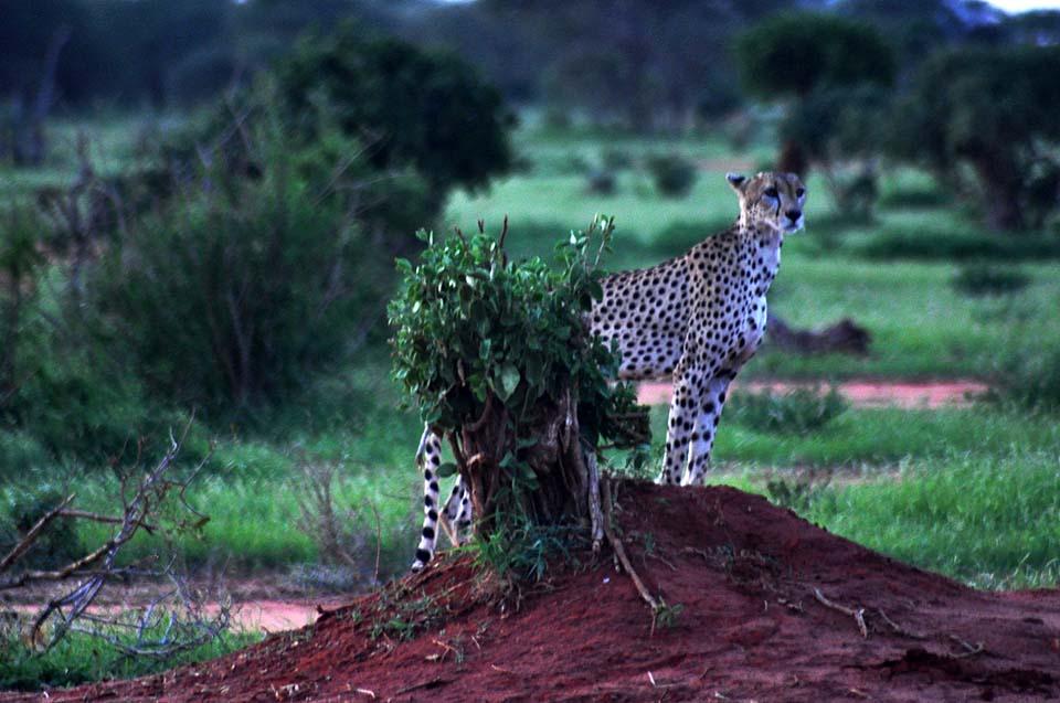 Kenya 2011 538