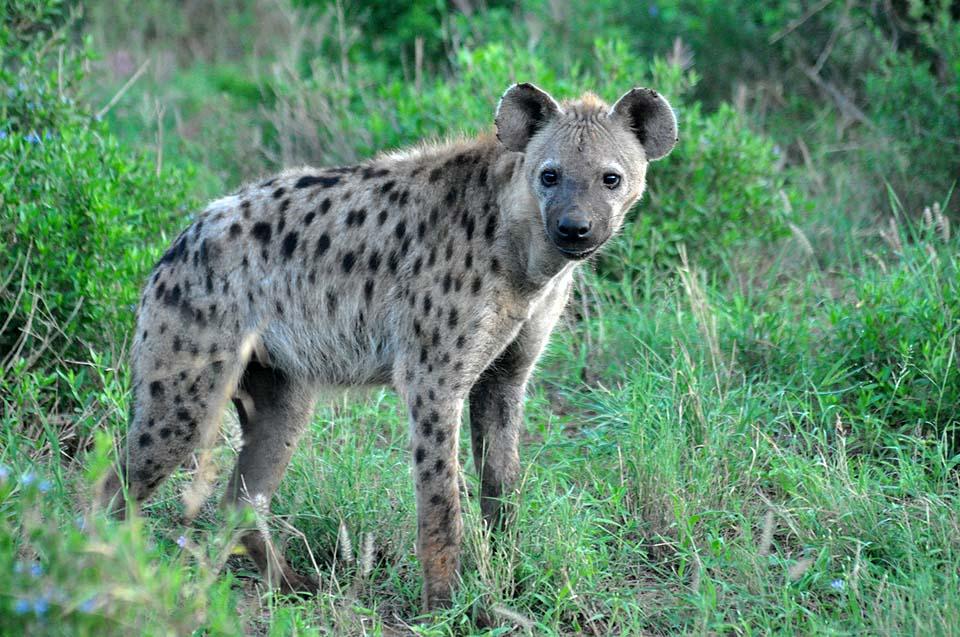 Kenya 2011 543