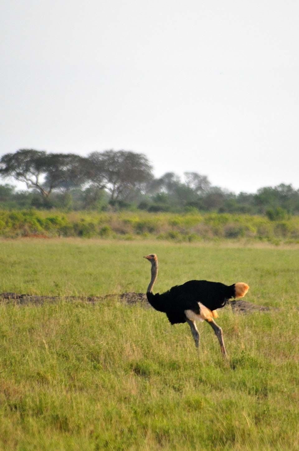 Kenya 2011 545