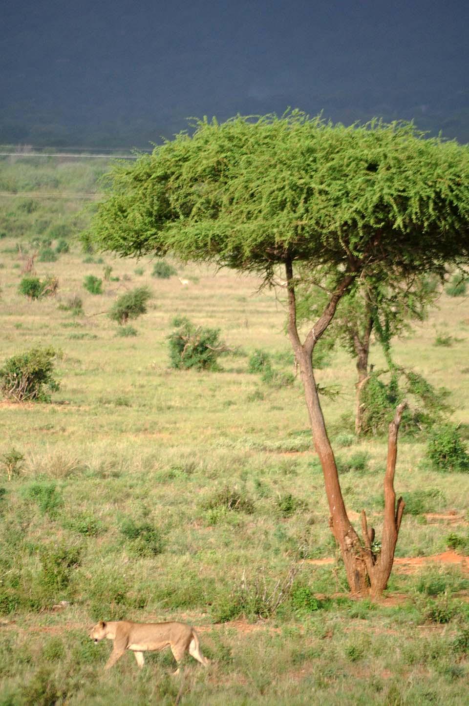 Kenya 2011 550