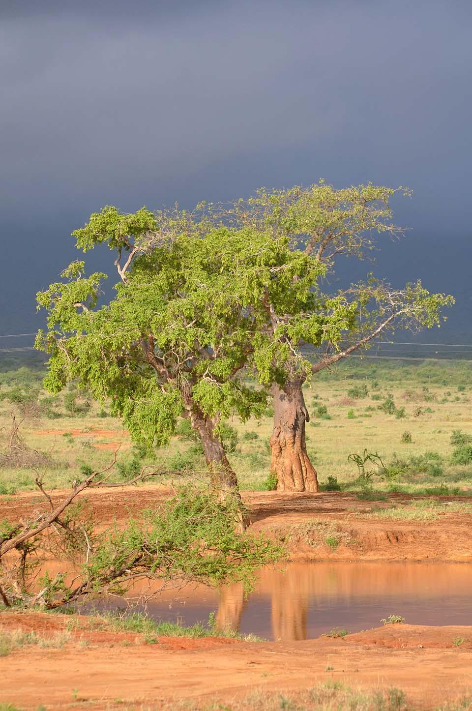 Kenya 2011 554
