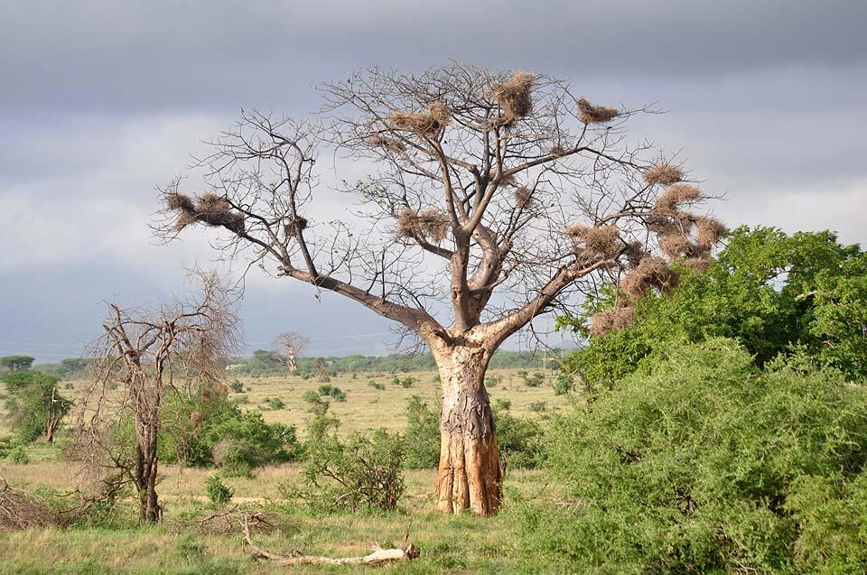 Kenya 2011 555