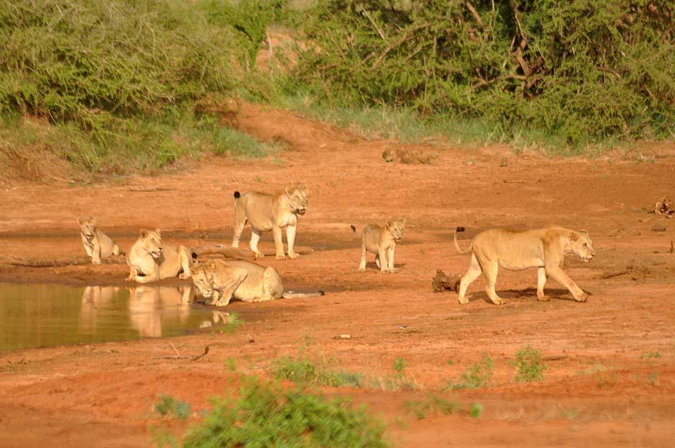 Kenya 2011 560