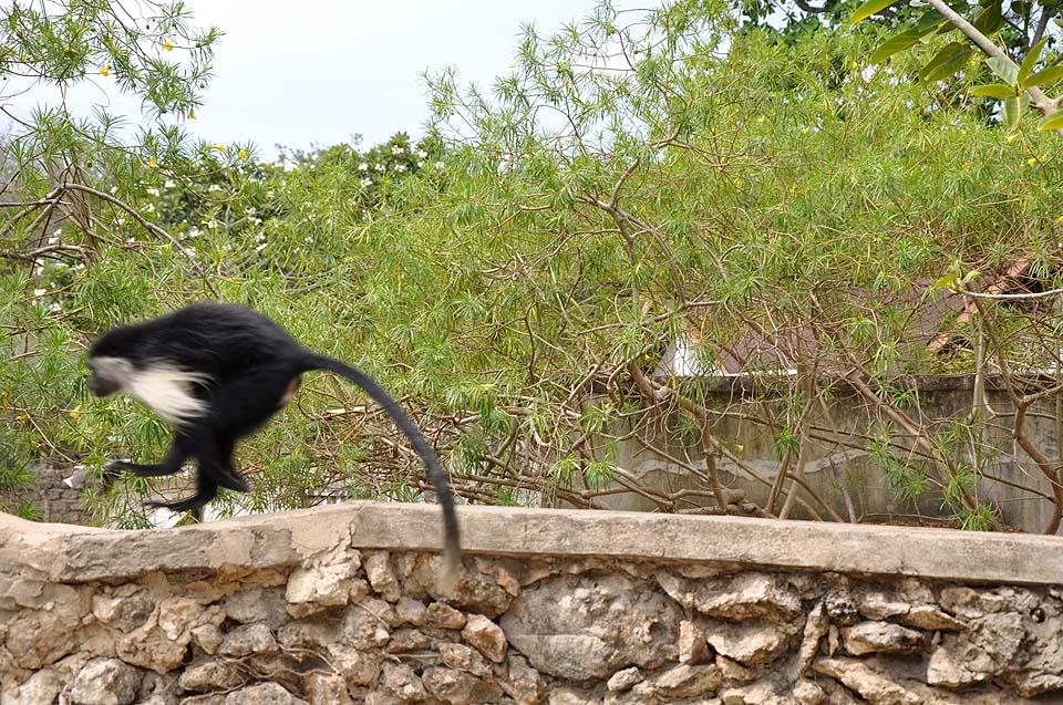 Kenya 2011 614
