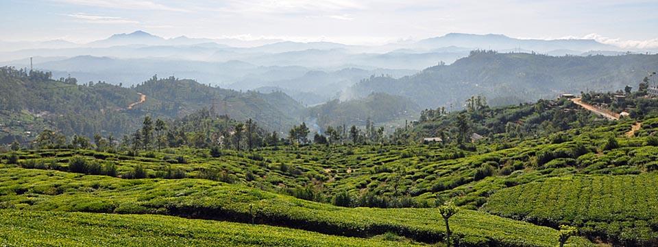 Pureté, Nuwara Eliya, Sri Lanka