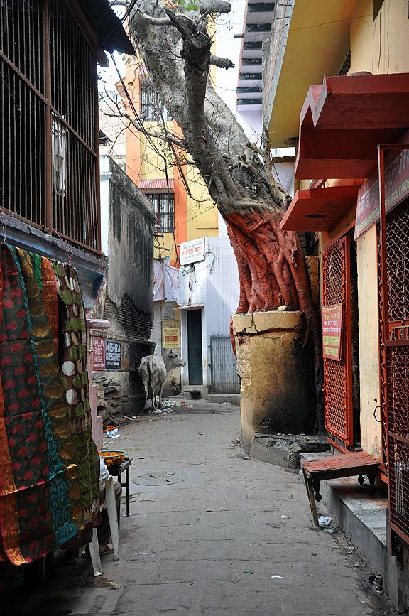 Inde 677