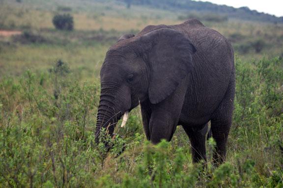 Tanzanie 2013 2012-12-26 275