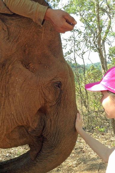 cambodge-245-elephant