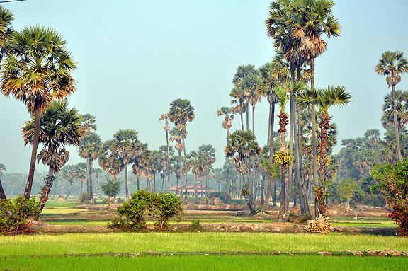 cambodge-805