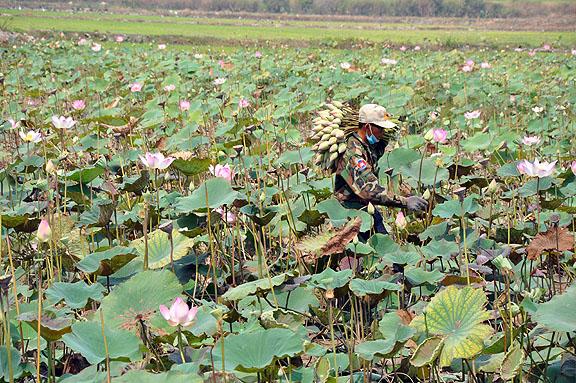 cambodge-944