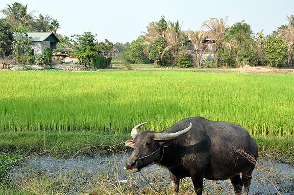 cambodge-992