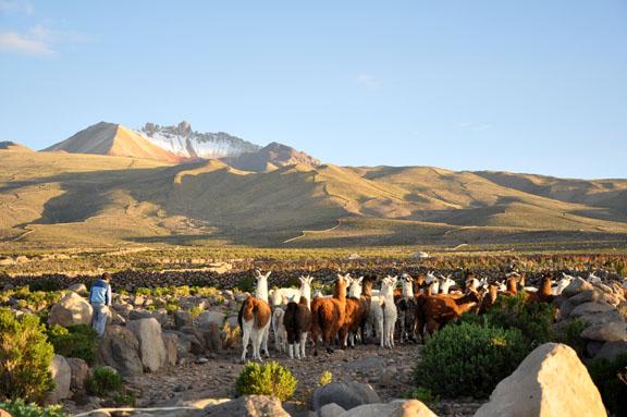 Bolivie, Bolivia 1448