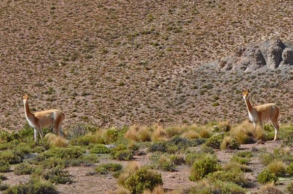 Bolivie, Bolivia 493a