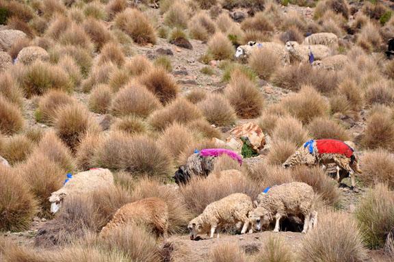 Bolivie, Bolivia 509