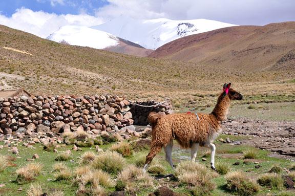 Bolivie, Bolivia 520