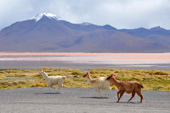 Bolivie, Bolivia 777