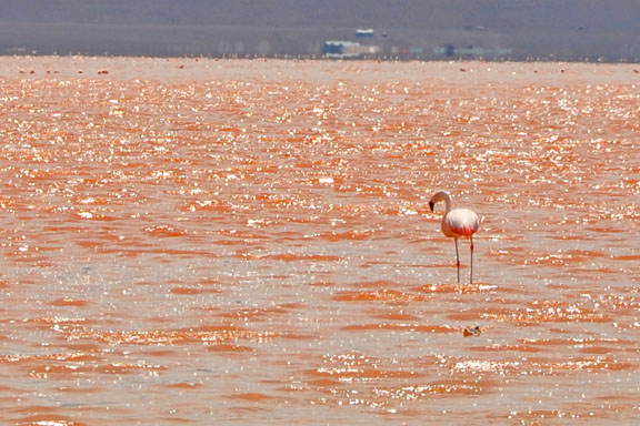 Bolivie, Bolivia 795a