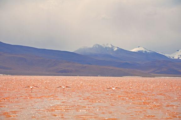 Bolivie, Bolivia 809a